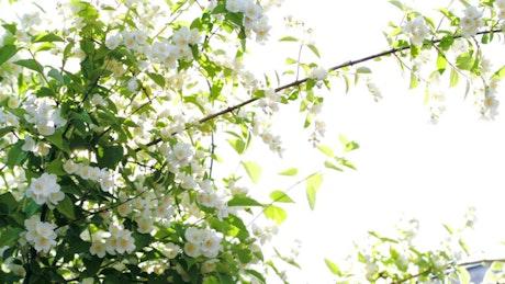 Sun shining over tree blossoms
