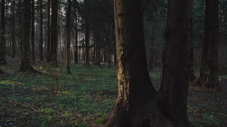 Sun shining through a dark forest