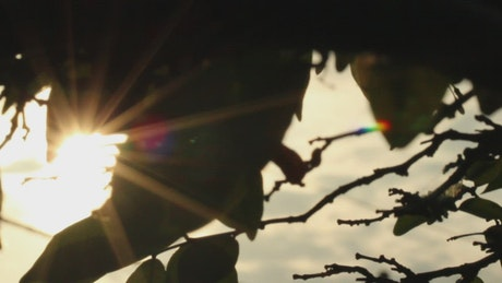 Sun shining through silhouetted leaves