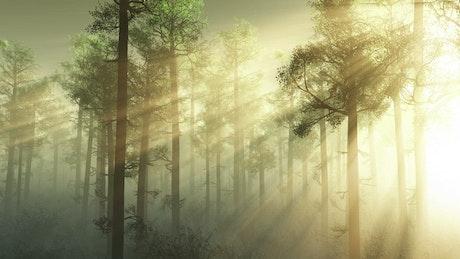 Sun through a misty forest
