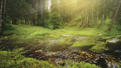 Sunbeams on flowing river in mossy forest