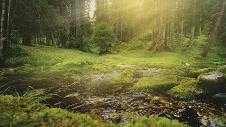 Sunbeams on flowing water in lush green forest
