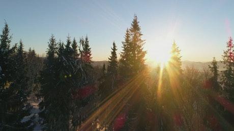 Sundown light covering the winter forest