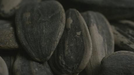 Sunflower seeds close-up shot