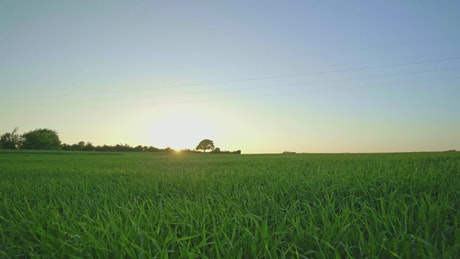 Sunlight over fields