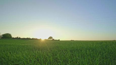 Sunlight over natural grass