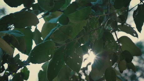 Sunlight passing through the leaves of a tree