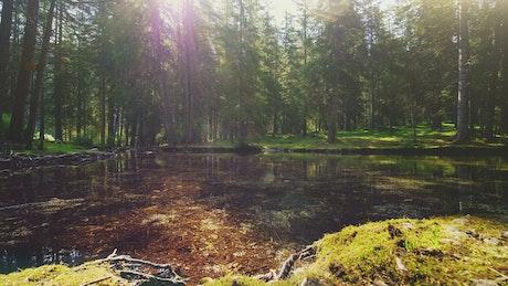Sunlight through trees on mossy riverbank