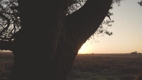 Sunset in the savanna through a tree