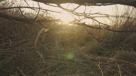 Sunset on the savanna seen behind the skyline