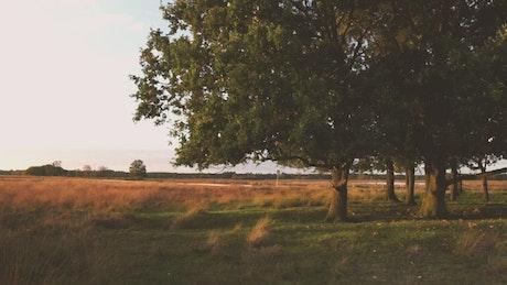 Sunset over fields of tall dry grass
