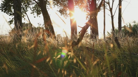 Sunset seen from the grass of a forest