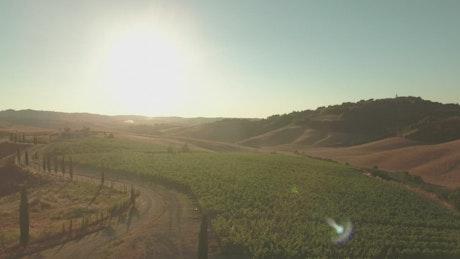 Sunshine over a vineyard