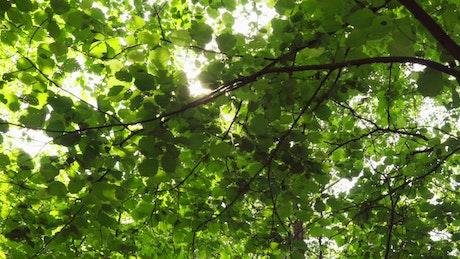 Sunshine through green leaves