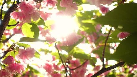 Sunshine through tree with flowers