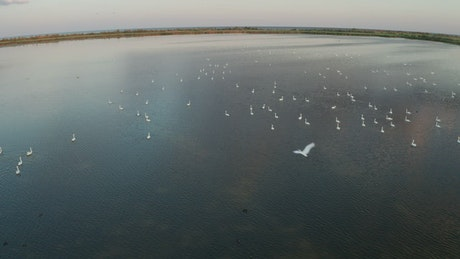 Swans swimming on a lake
