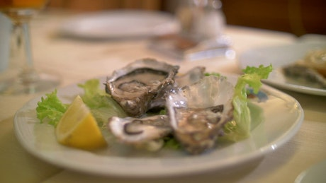 Taking a photo of Oysters