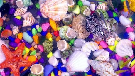 Tank full of fish and sea shells