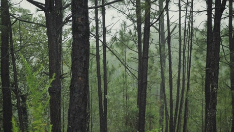 Temperate forest with trees