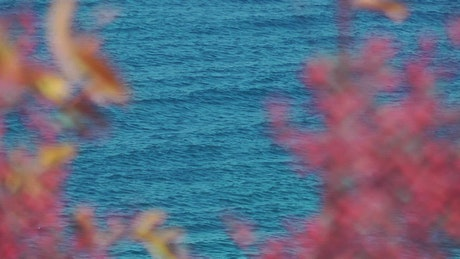 The sea seen from afar between plants