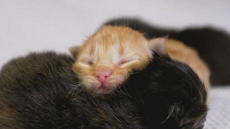 Three newborn cats