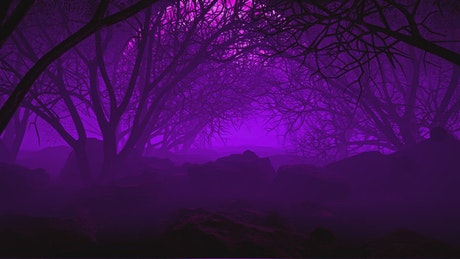 Through a poisonous forest with purple haze
