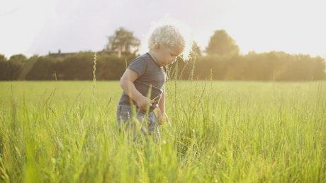 Toddler picking grass