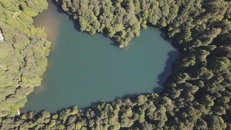 Top aerial shot of a lake among trees in a forest