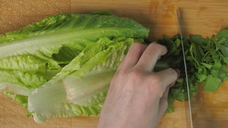 Top view of a person cutting lettuce