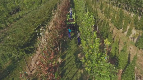 Top view of labourers in tree farm