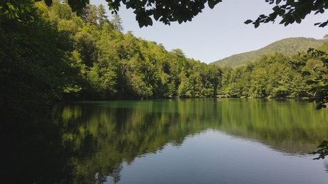 Tour a lake in the middle of a pine forest