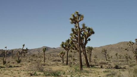 Tour in the desert