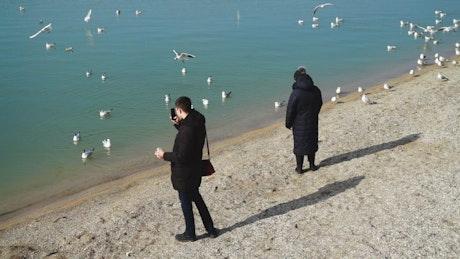 Tourists taking photos of seagulls