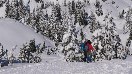 Tourists walking on the snow among pine trees