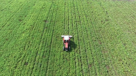 Tractor crosses a green field