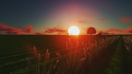 Tractor in a wheat field at sunset done in CGI
