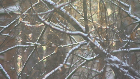 Tree branches when it snows