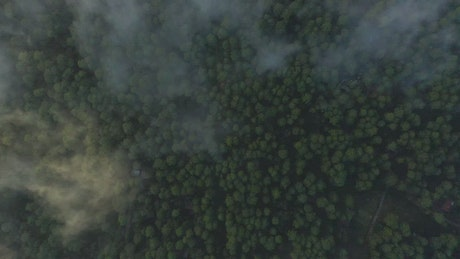 Tree covered forest from above through the clouds