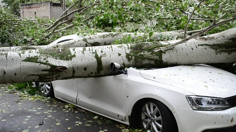 Tree fallen on a car on the street