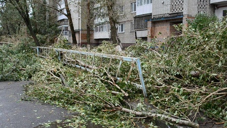 Tree fallen on the street by a hurricane
