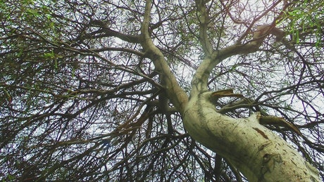 Tree full of branches seen from below