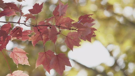 Tree leaves in autumn, close up