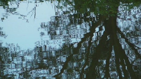Tree reflected in the waves of a lake