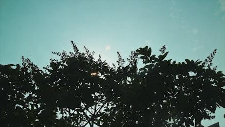 Tree silhouette against a cyan sky