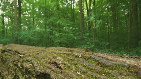Tree trunk across the path