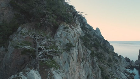 Trees growing on the side of a cliff