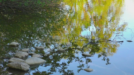Trees reflected on a lake's water