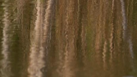 Trees reflecting on a still lake