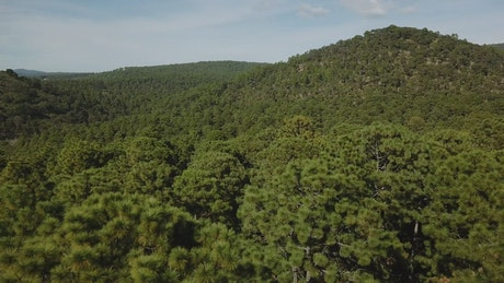 Treetops on a hill