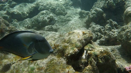 Tropical fish over coral